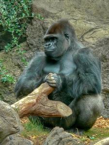 gorila-con-tronco