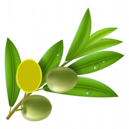 rama 3 olivas copia